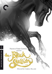Blackstallion_sketch2_thumbnail