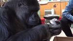 Koko_kitten_small_thumbnail