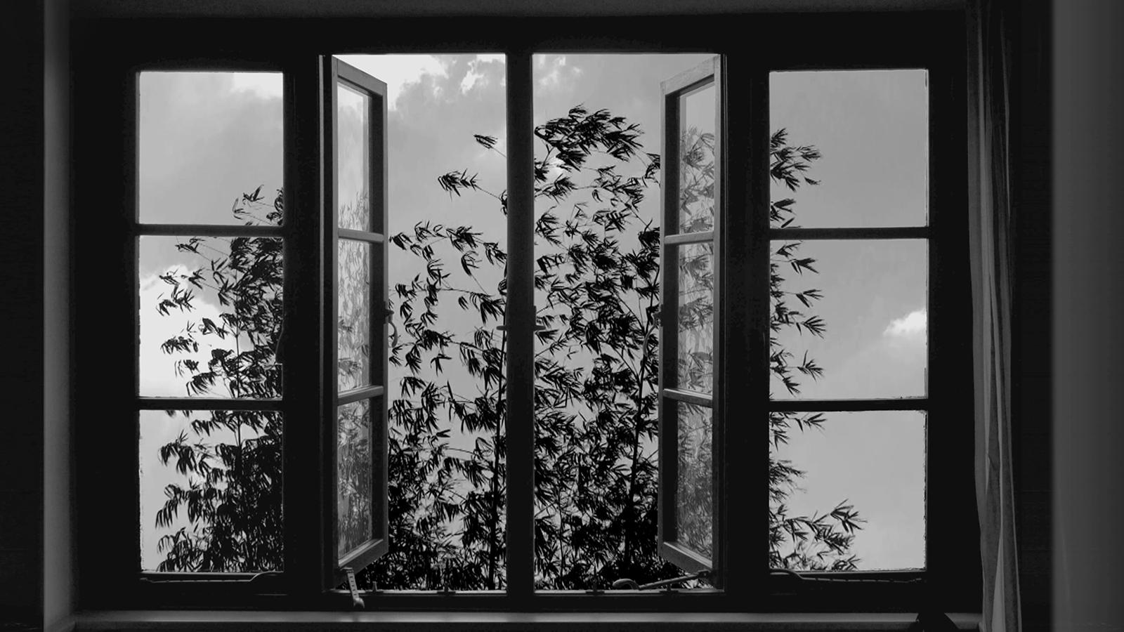 Watch the New Trailer for Abbas Kiarostami's 24 Frames
