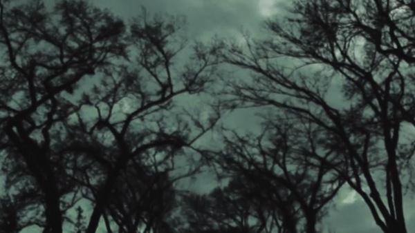 Elms: A Cine-Essay