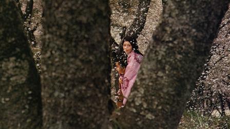 Blossoming_cherry_trees_video_still