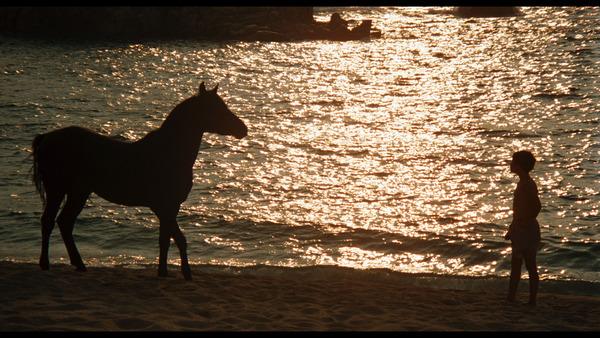 Stallion_large