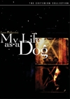 My Life as a Dog (Criterion DVD)