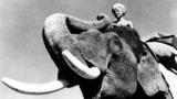 Sabu_filmw_elephantboy_w160