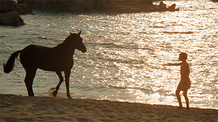 Film_765_blackstallion_original