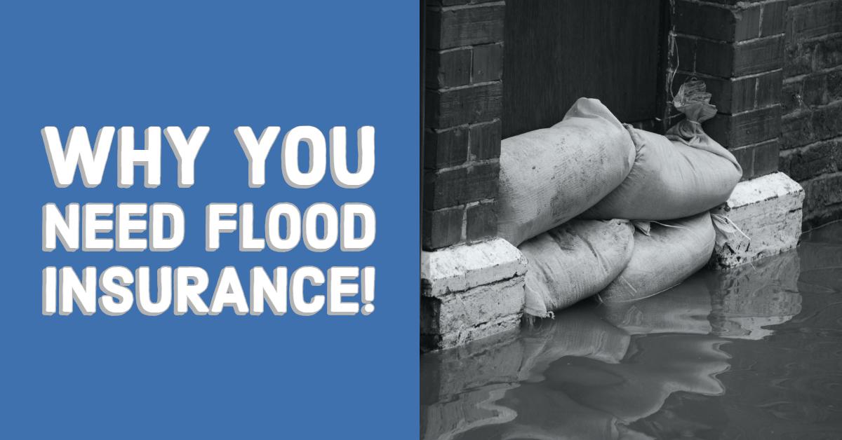 Original you need flood