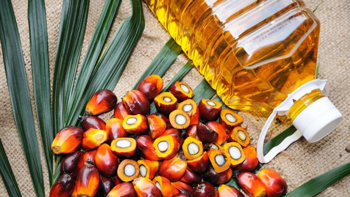 Aceite de palma, insumo para producir jabón