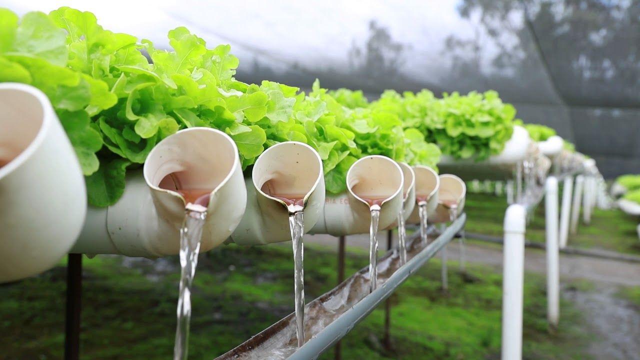 Qué son los cultivos hidropónicos