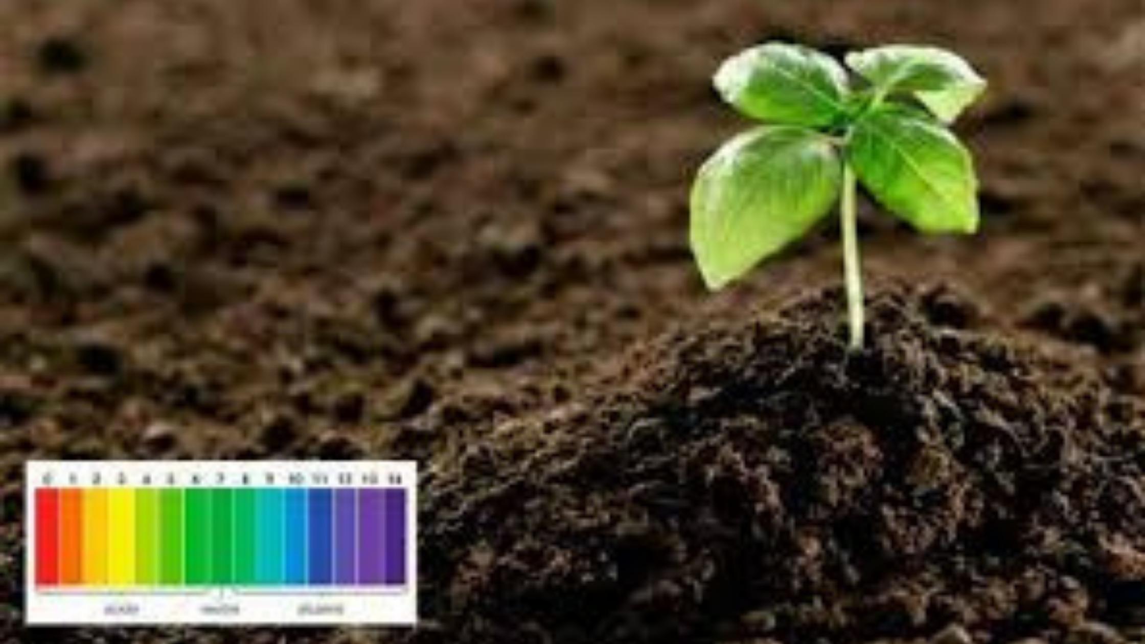 ¿Qué es el suelo ácido y cómo tratarlo?