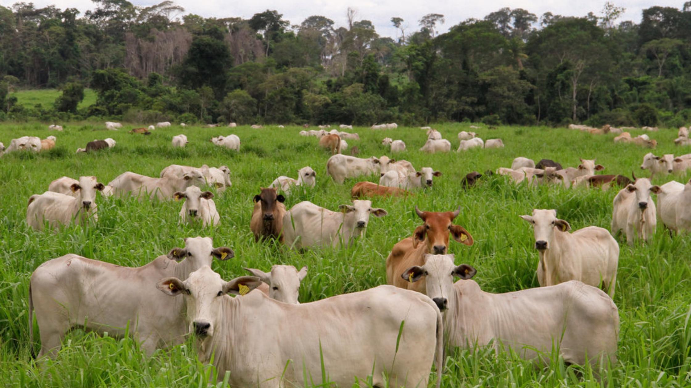 Tendencias de la ganadería sostenible en el futuro