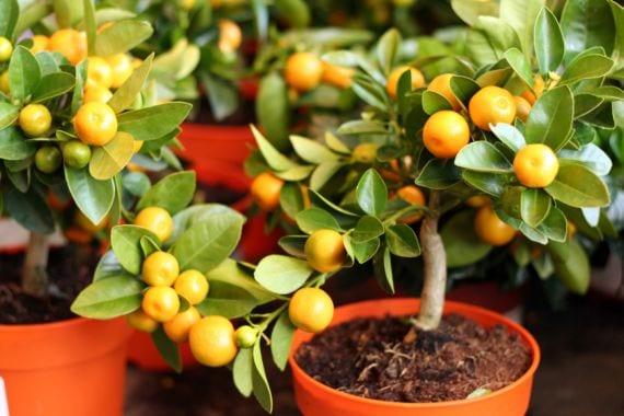 10 consejos para cultivar con éxito tus árboles frutales