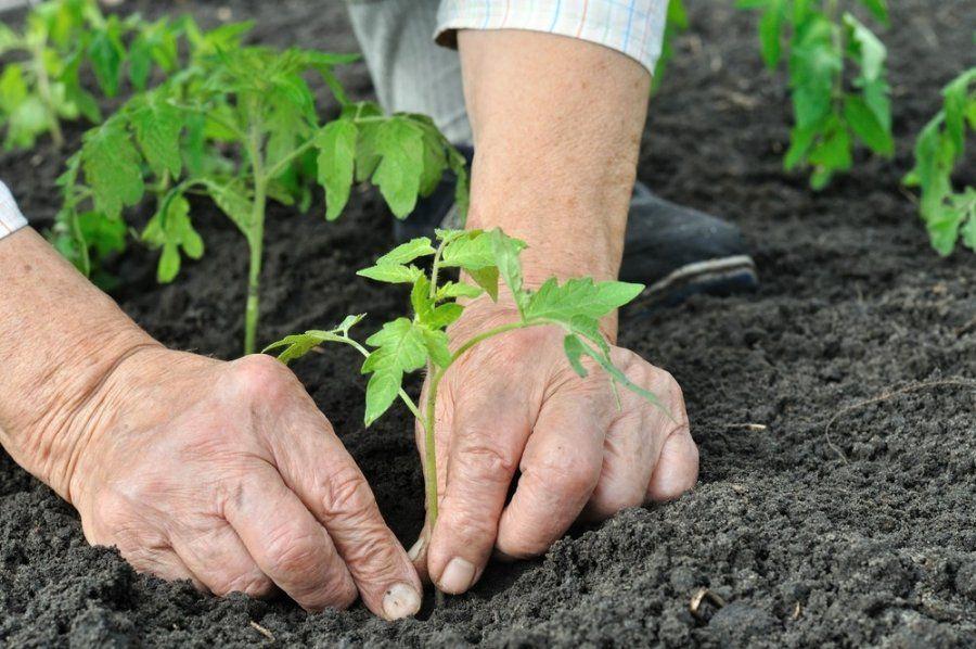 Agrosync: tecnología e innovación al servicio del agro