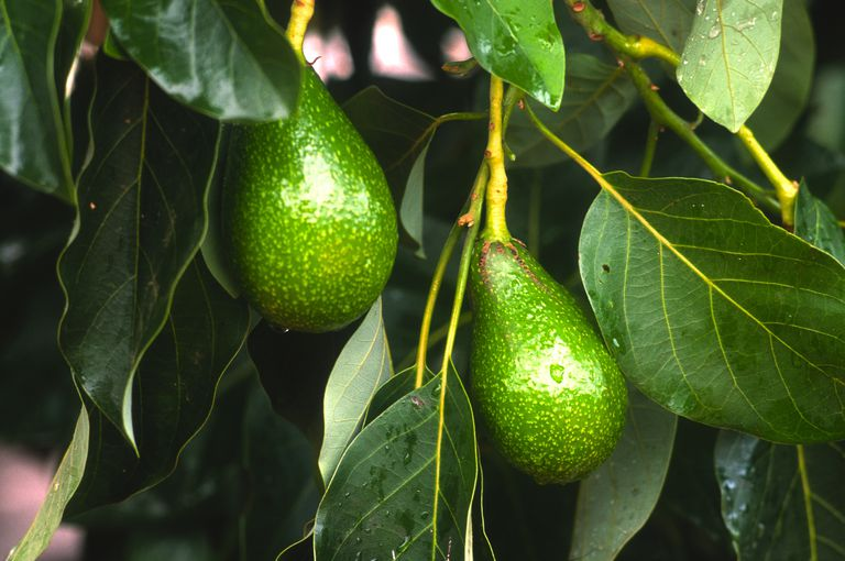 Manuchar y Fertinagro, una alianza para la agricultura