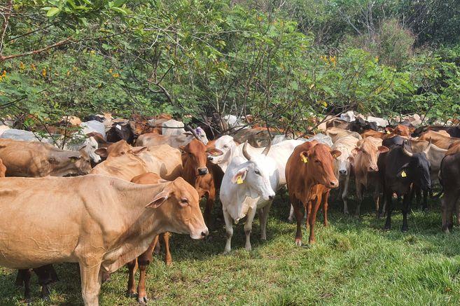Por qué ser regenerativo es el futuro de la ganadería