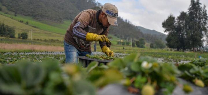 Banco Agrario anuncia prórrogas en los plazos de pagos para agricultores afectados por el Paro Nacional