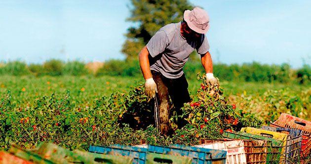 Importancia de la agricultura sostenible