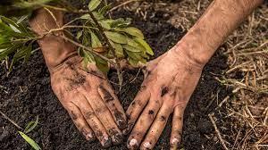 El sembratón superará meta de 110.978 árboles nativos plantados