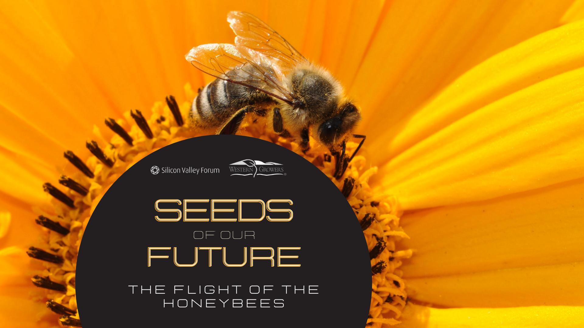 Semillas de nuestro futuro: el vuelo de las abejas