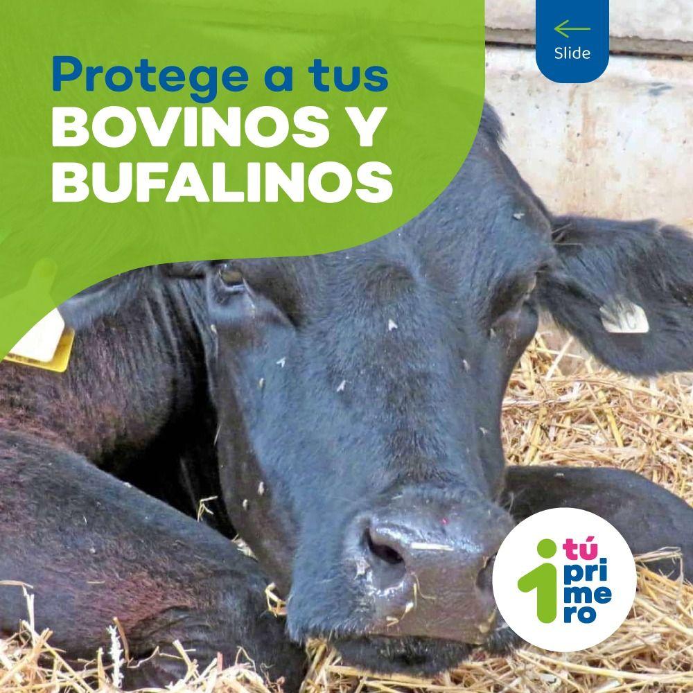 El Seguro Pecuario como instrumento financiero para asegurar la continuidad del negocio de nuestros ganaderos en Colombia