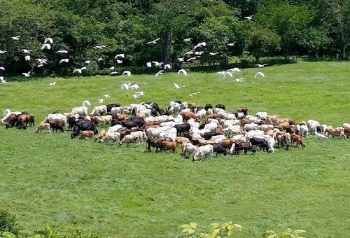 El uso de técnicas de ganadería regenerativa aumenta la rentabilidad de las ganancias
