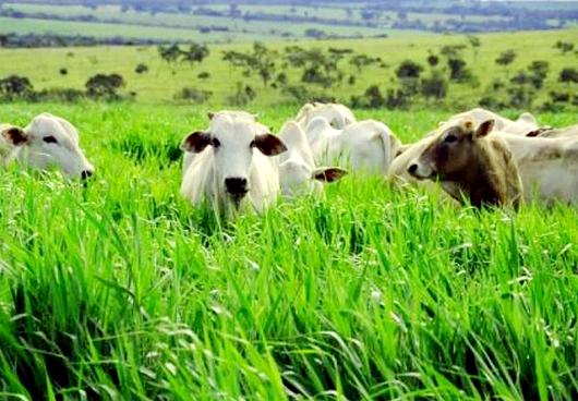 El objetivo de la implantación de pasturas