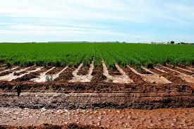 Sólo suelos saludables permitirán una agricultura más sostenible