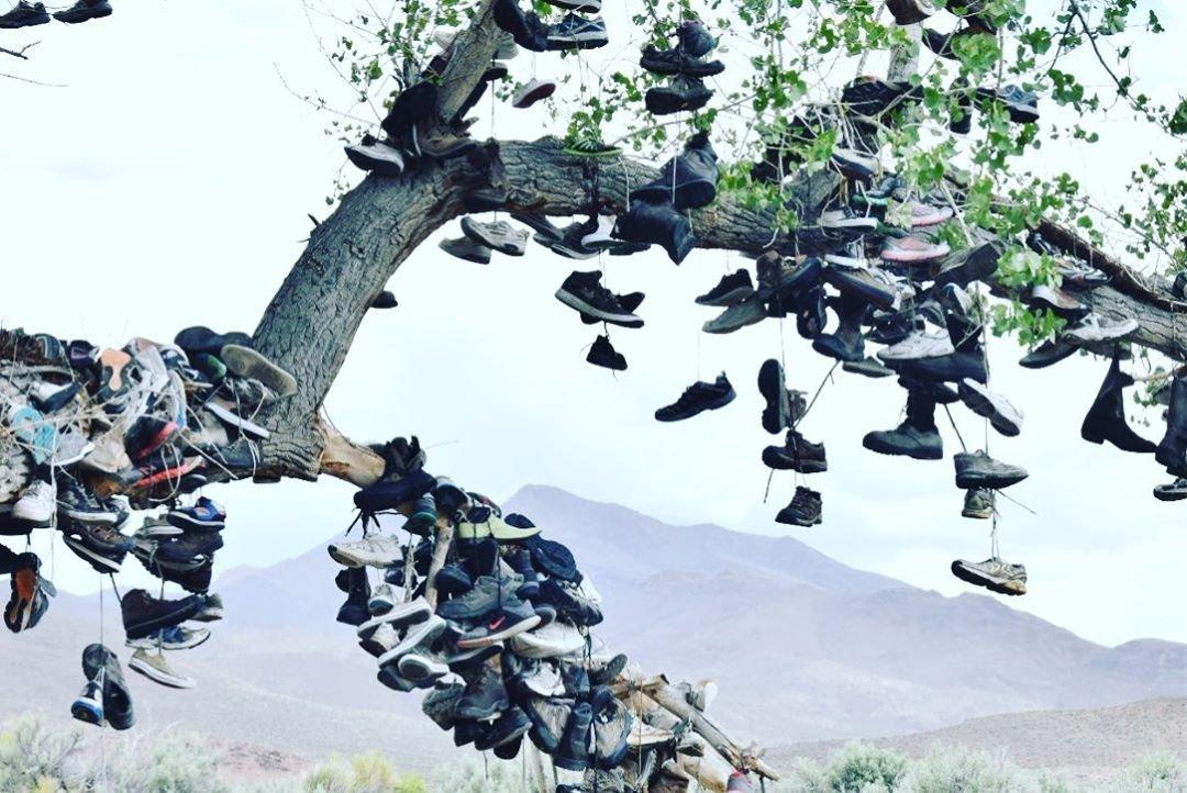 """Nahe der Stadt Middlegate in Nevada wächst auf dem US Highway 50, der sogenannten """"Loneliest Road in America"""", vor dem Hintergrund kahler, trockener Wüste und Berge ein einsamer Pappelbaum, der mit Schuhen bespannt ist. Bäume, die mit Gegenständen geschmückt sind - Schuhe, Unterwäsche, Gummi oder was auch immer Passanten zur Hand haben -, sind so gesund wie Apfelkuchen und in Amerika fast so verbreitet. An diesem Schuhspanner ist jedoch eine besonders gute Geschichte (und viele Schuhe) angebracht. Es passierte wie folgt: In einer warmen Wüstennacht geriet ein frisch verheiratetes Paar, das unter dem großen Pappelbaum kampierte, in einen Streit. Die Frau, eine aufbrausende Sorte, drohte wegzugehen. """"Wenn Sie das tun"""", knurrte der Mann, """"müssen Sie barfuß gehen."""" Dann warf er ihre Schuhe in den Baum und fuhr zu einer nahe gelegenen Bar, wo der Barkeeper, wenn überhaupt, ein aufrechter Bürger war einer, überzeugte ihn, zu seiner Frau zurückzukehren. Er fuhr zurück zum Pappelbaum - natürlich war seine Frau immer noch da - und das Paar schaffte es, sich zu versöhnen und glücklich zu leben. Sie kehrten einige Jahre später mit ihrem ersten Kind zurück, um seine Schuhe in den Baum zu werfen, unter dem sie gekämpft und sich wieder vereint hatten. Der Rest ist, wie man sagt, Geschichte.  #travelnevada #travelgram #travelphotography #loneliestroadinamerica #travel #travelblog #travelblogger #travelguide #roadtrip #roadtripusa #usaroadtrip #uswestcoast #reiseblog #reiseguide #reisen #usa #shoetree #theshoetree #middlegate #highway50 #loneliesthighway #loneliestroadinamerica #longroad #shoes #wildwest"""