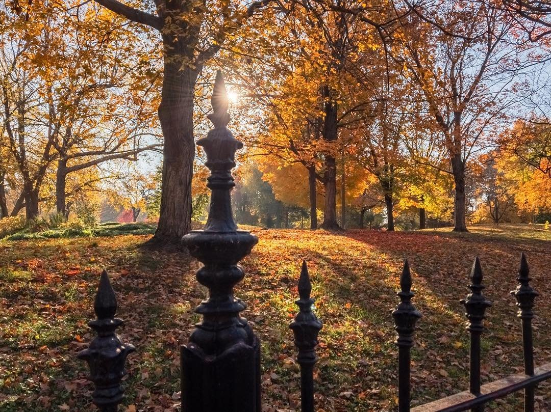 Fall Color is in Full Force Across St. Louis - Explore St. Louis