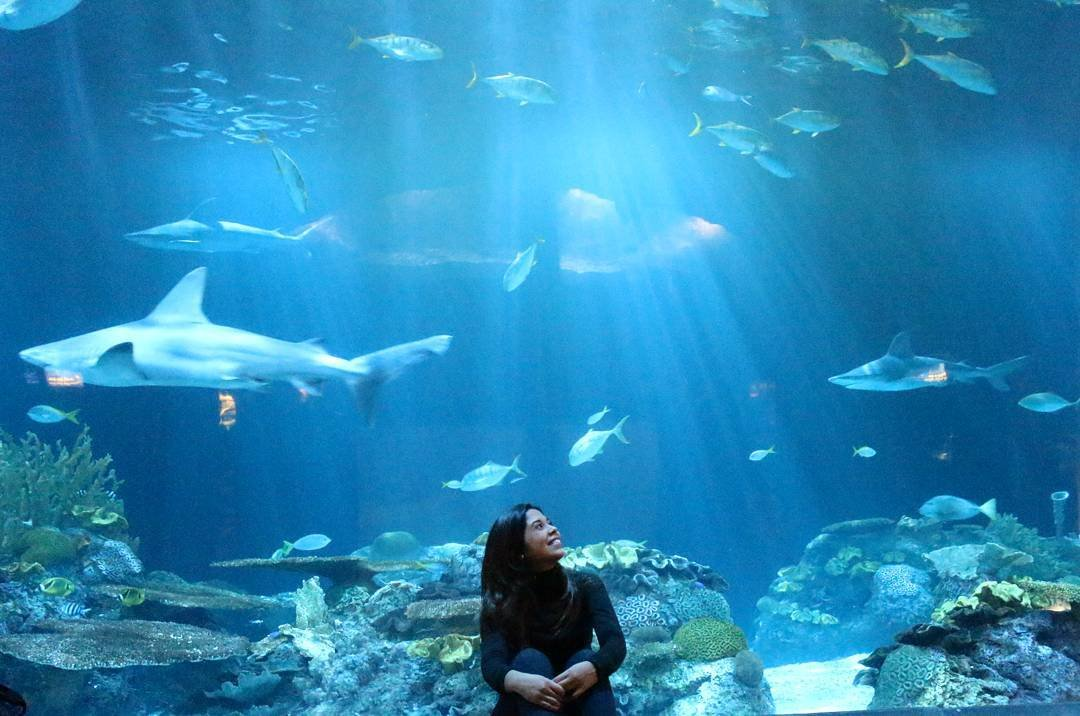 what you need to know to visit shedd aquarium citypass scrapbook