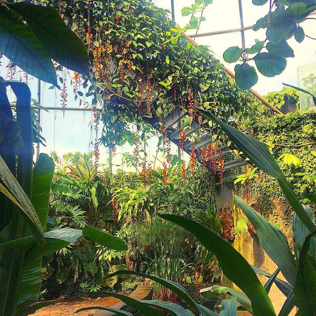 Botanischer Garten der Universität Zürich