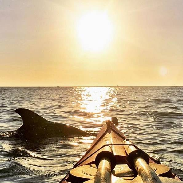 Three of our favorite things: dolphins, sunsets and kayaks. 🐬 📷: @coastalkayakcharters #getsiratafied #liveamplified