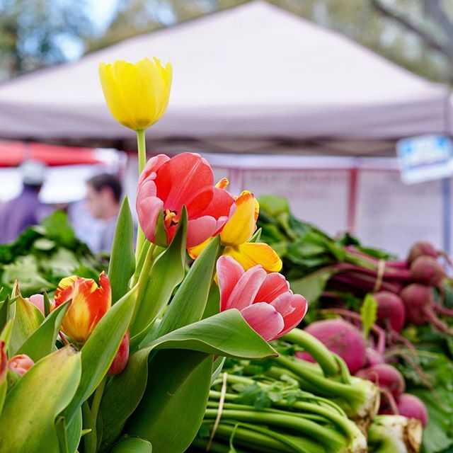 Hoping your Tuesday is half as beautiful as these #flowers @littlepondfarm 🌷 #hitthemarket with them each & #everysaturday at #stpete #saturdaymorningmarket