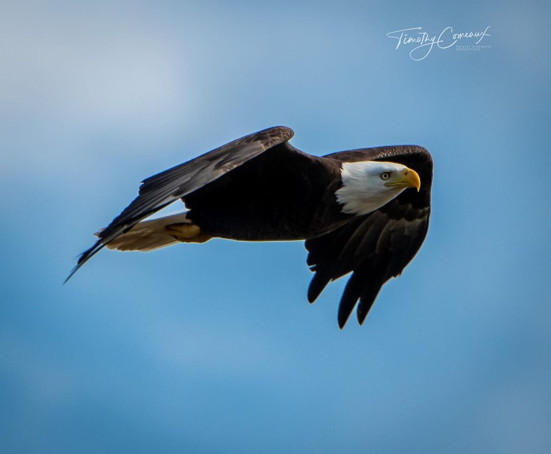 Eagle Expo Weekend Offers Top Notch Birding Louisiana Travel