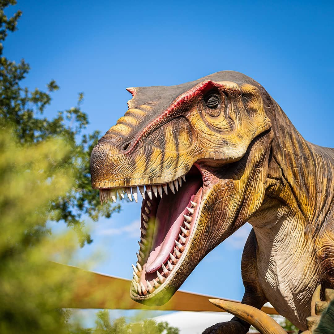 What a surprise to find dinosaurs at Springs Preserve. Danger among the cacti. Roar! | | #aroundtheworldpix #dinasaur #dinolove #dinosaur #dinosaurart #dinosaurlove #dinosaurs #dinosaursaturday #dinosaursofinstagram #eclectic_shotz #epiclifeimages #exploringtheglobe #InstaVegas #jurrasicworld #lasvegas_lv #lasvegascityguide #mytinyatlas #roamtheplanet #springspreserve #stayandwander #theglobewanderer #theropod #travelnevada #travelog #travelon #unlimitedlasvegas #vegaslife #vegasnow #visualmobs #vivalasvegas