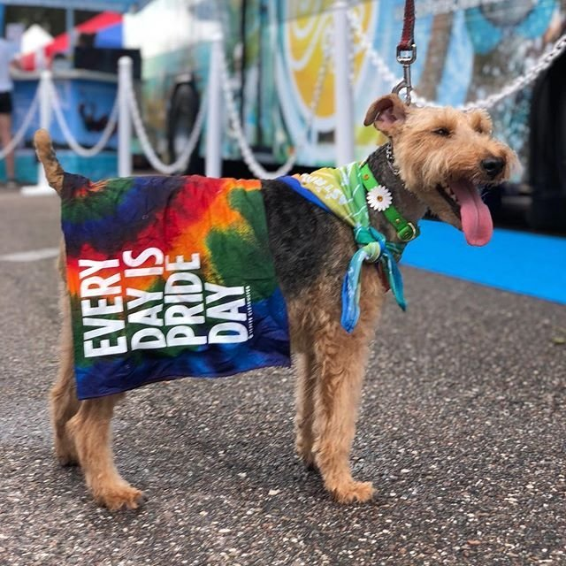 Rose had a great time at the St. Pete Pride Festival today! #Rose #welshterrier #pride #stpetepride #dogsofinstagram #stpetersburg #stpetersburgflorida #welshterriersofinstagram