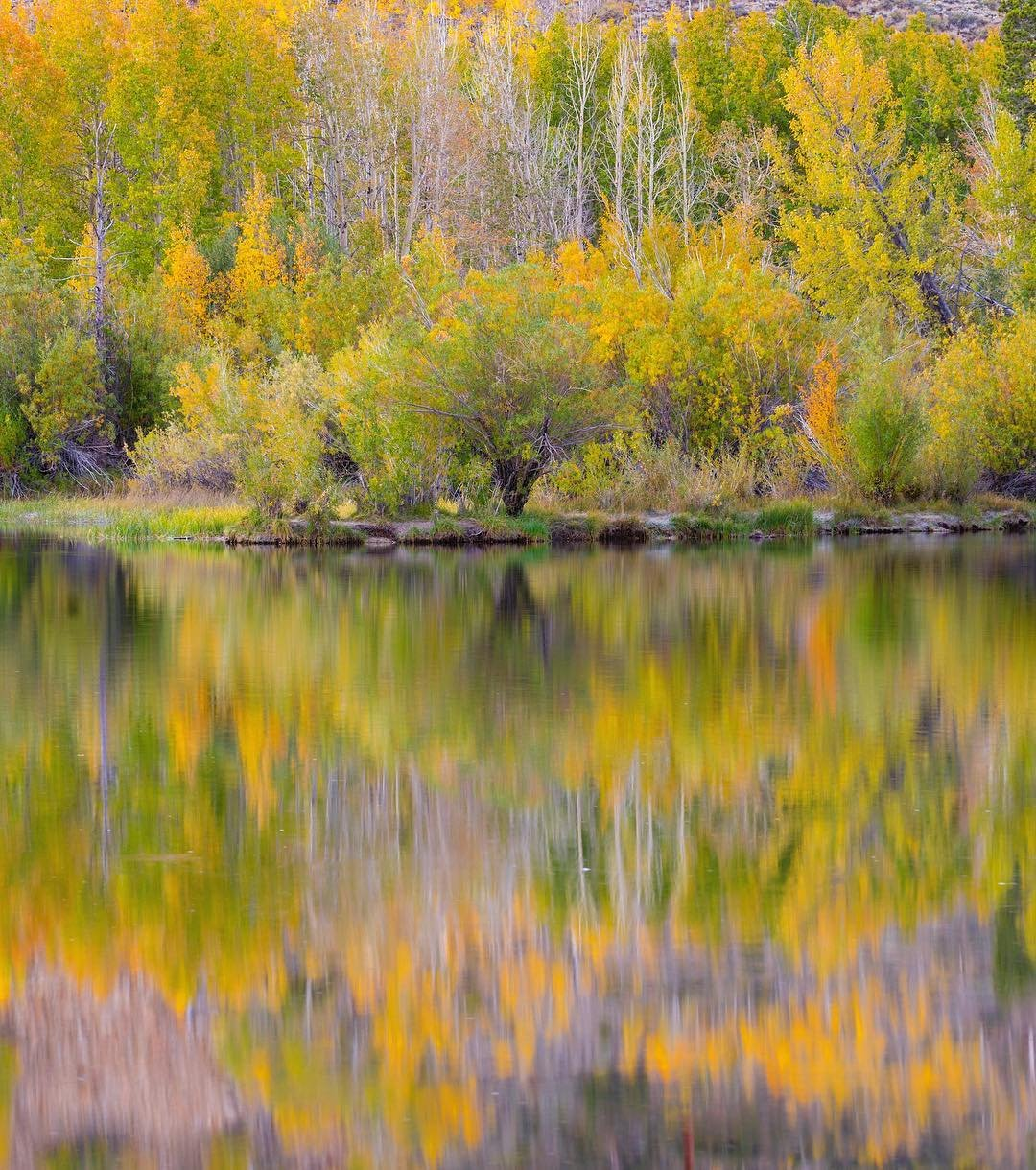 Fall Colors | Bishop Visitor Information Center