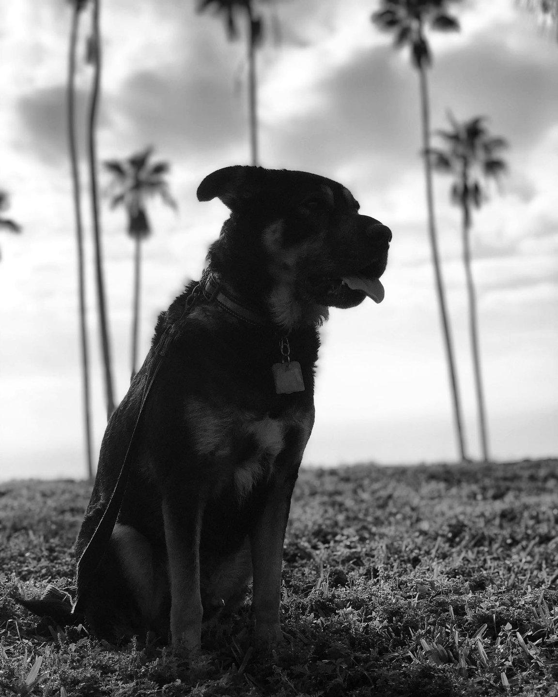 Celebrating #TongueOutTuesday on a Wednesday. It was an accident. #👅 #dogsoftampabay »» »» »» 👀 ⚫️ 👅 »» »» »» #dogsofinstagram #instadog #dogsofstpete #stpete #stpetersbarker #stpetersburg #florida #igersstpete #dogslife #cleargram #igers941 #instagram_florida #iheartstpete #jj_florida #muttsofinstagram #rescuedogsofinstagram #roamflorida #dogfriendly #hashtagflorida #LoveFL #liveamplified #rescuedogsrock #rescuedog #dog #DOGSOFINSTA thenewbarkerdogmagazine #🐾 #dogs_of_instagram