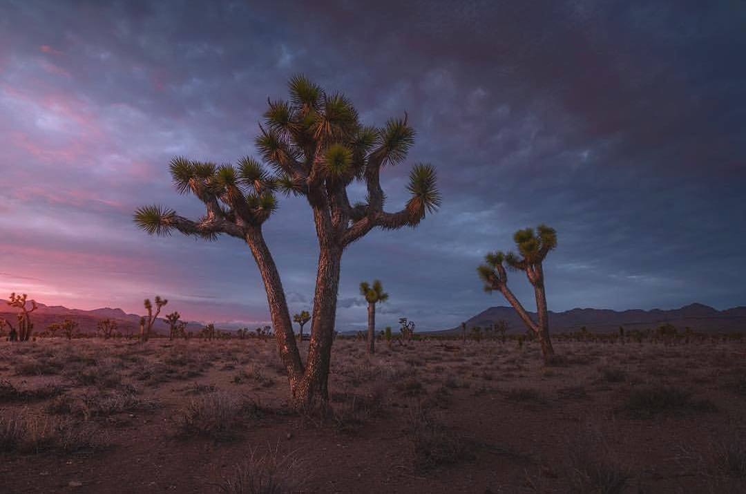 Beauty of the desert. 📷: ryandyar