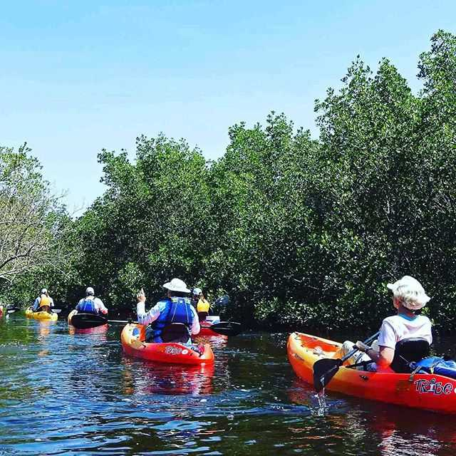 UP A CREEK WITH LOTS OF PADDLES! The Newman Branch Creek Paddling Trail is one of many meandering blue ways in Tampa Bay that encourage paddlers to explore the backwaters of the bay.  Tag YOUR photos with #LoveTampaBay . . #LoveFlorida #Estuary #waters #bay  #tampa #stpete #paddling #kayak #canoe #pinellas #hillsborough #photography #wildlife # trails #liveamplified #igersstpete #igerstampa