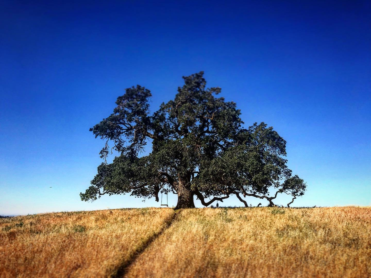 How to Find the Tree Swings in Vacaville, CA - Visit