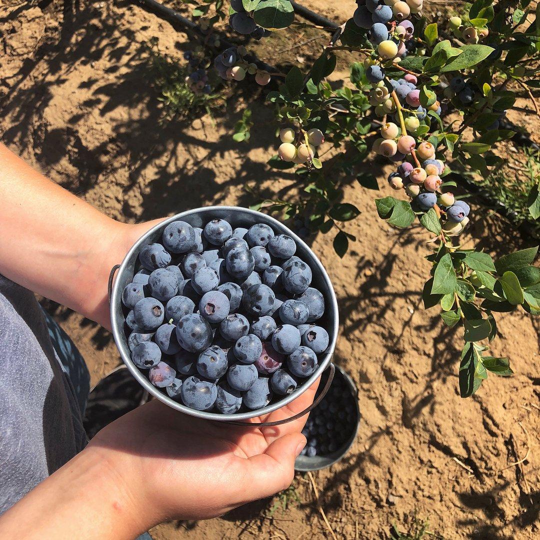 Top 6 U-Pick Farms in Stockton, California Area | Visit Stockton