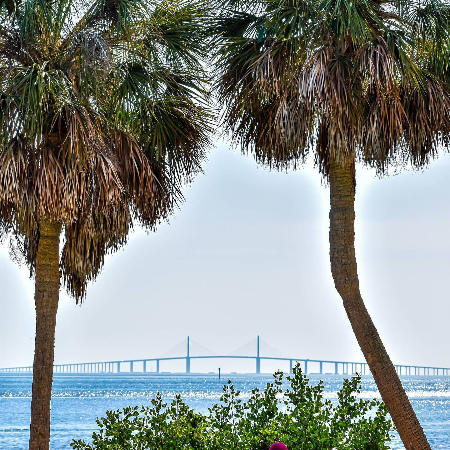 A palm tree and skyway state of mind. 🌴✌☀️ . . . . . . . . . . . . . #cleargram #igersstpete  #sunshinecity #iheartstpete #727 #LoveFL #liveamplified #staysaltyflorida #sunshineshere #pureflorida #instagram_florida #hashtagflorida #roamflorida #explorida #tampabay #onlypinellas #florida_greatshots  #architexture #architecture  #palmtree #bridge #thisplacematters  #pointofview #leadinglines #hey_ihadtosnapthat #wonderful_places #visualsoflife #stayandwander #roadsideamerica #welivewhereyouvacation
