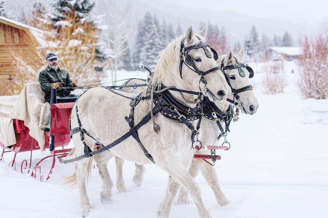 Photo by user dougloneman, caption reads Snowfall, mountains and a sleigh; could there be any better ingredients for Christmas? #montana #christmasinthemountains #horses #christmas @rainbowranchlodge