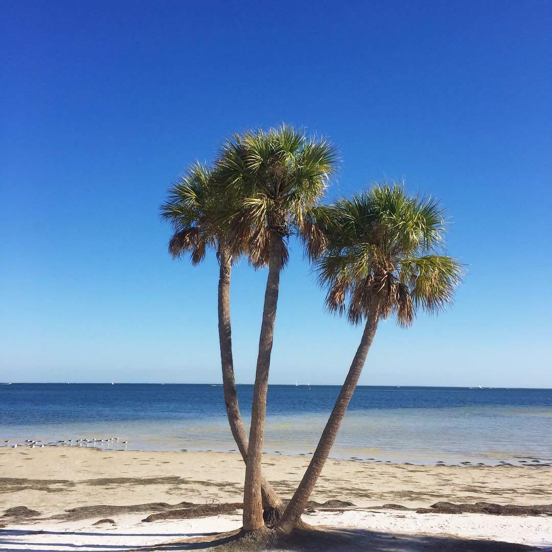 Flawless ☀️🌴. . . . . . . . . . . . . #instaburg #igersstpete #tampabay #paradise #unlocktampabay #liveamplified #vspc #hiddentampa #sunrise #igersworld #palmtrees #lovefl #ilovetheburg