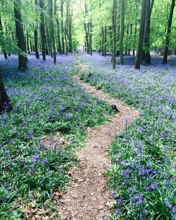 Flowers & Gardens Of The UK Tours