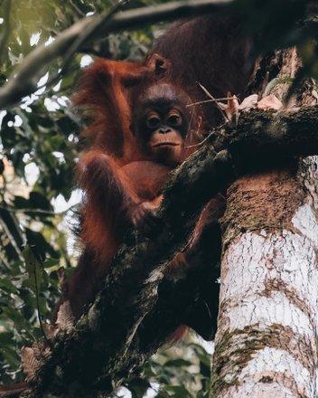 Borneo Wildlife Adventures