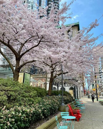 Cherry Blossom in Japan Tours