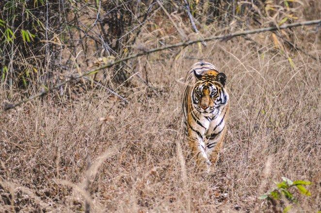 Indian Safari Tours