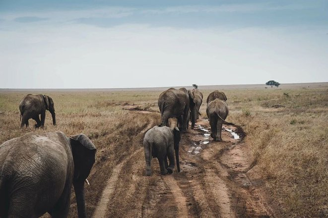 Serengeti & The Great Migration Tours