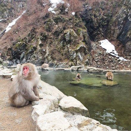 Nagano Snow Monkeys & Japanese Alps Tours